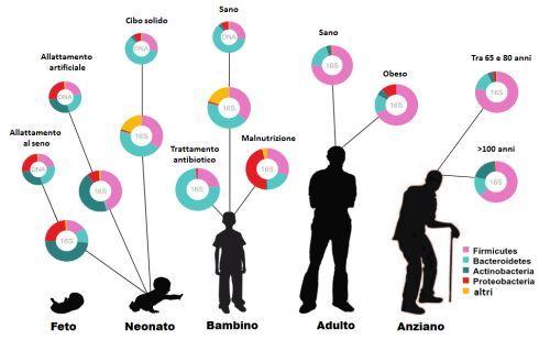 microbiota ed età